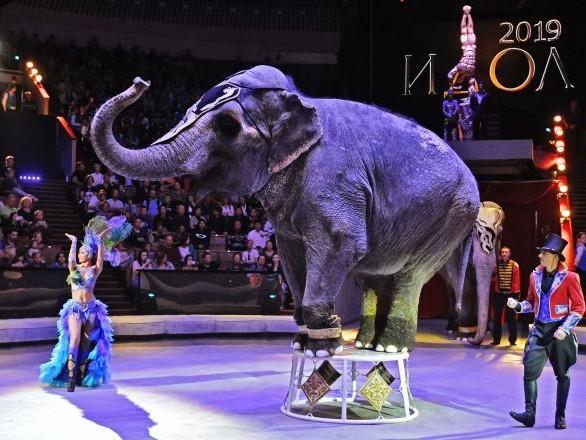 Quel futur pour les cirques face à l'interdiction des animaux sauvages?
