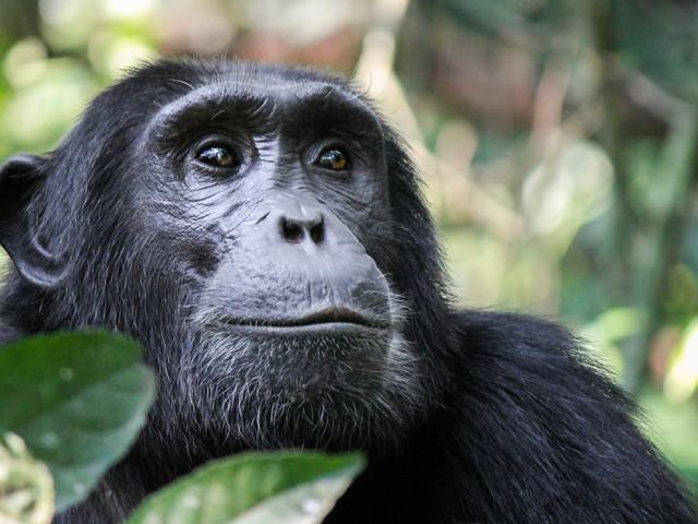 Les animaux aussi pratiquent la distanciation sociale pour empêcher la propagation de maladies