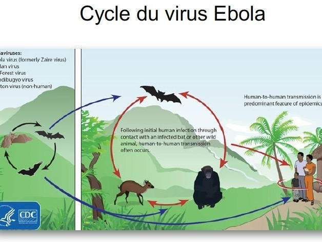 Épidémiologie, problématiques et enjeux (8/8) : Ebola : une épidémie après l'autre