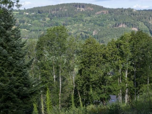Planter un arbre par habitant pendant 30 ans pour adapter la forêt