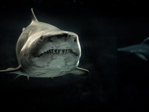 Voici le Titanichtys, un poisson géant tout en armure … mais fragile de la mâchoire