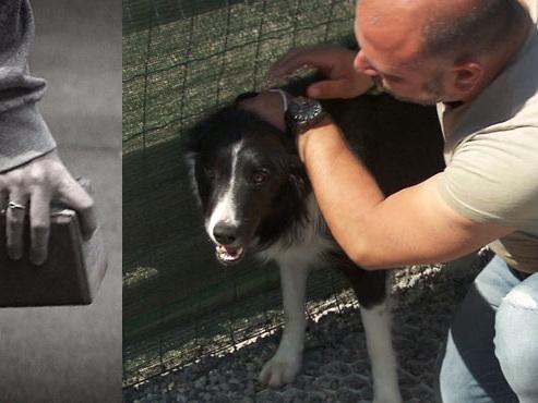 Colfontaine: sa voiture et son chien touchés par des jets de pavés depuis le pont du RAVeL