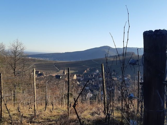 Alsace : un dimanche de février avec des températures dignes d'un mois de mai