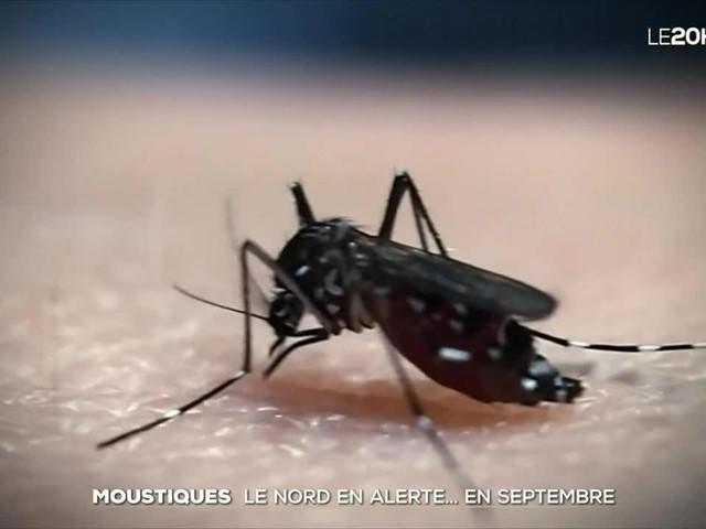 Moustiques : le Nord en vigilance orange prolifération et piqûres inhabituelles