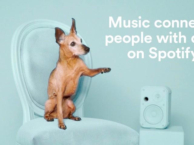 Adoptez un chien qui partage vos goûts musicaux