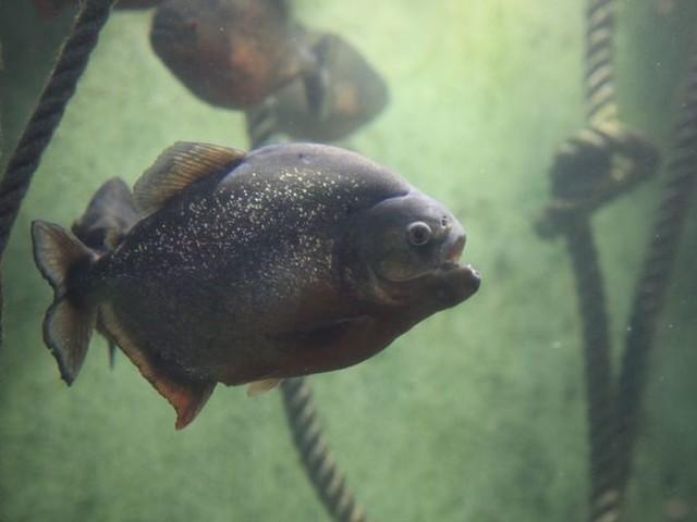 """Confinement : ambiance """"un peu glauque"""" à l'aquarium de Saint-Malo"""