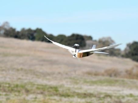 Les drones pourraient bientôt voler comme des oiseaux