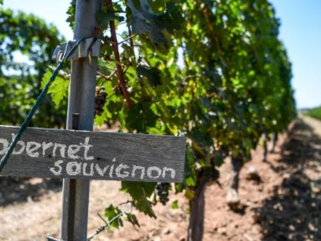 Malgré les obstacles, l'industrie du vin turque s'accroche pour vivre