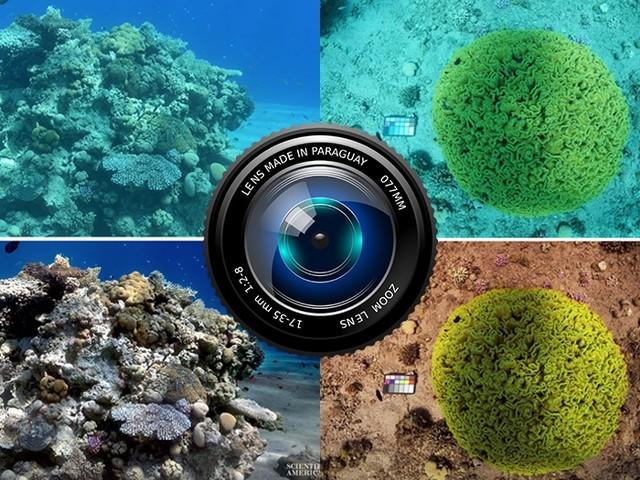 Ce filtre photo révèle les vraies couleurs du fond marin en effaçant l'eau !