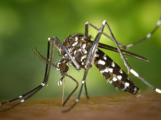 France: appel à la vigilance après deux cas de Zika en métropole