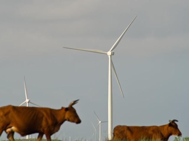 Curieusement, les États-Unis s'en sortent très bien sur le plan des énergies renouvelables