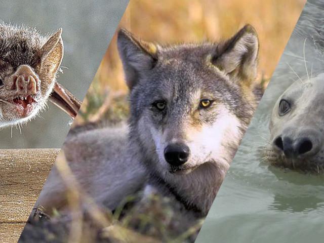 Constat extrêmement alarmant en France : une espèce de mammifère sur trois est menacée
