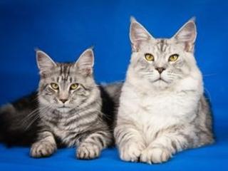 Assurance chats et chiens : un marché avec de fortes marges de manœuvre