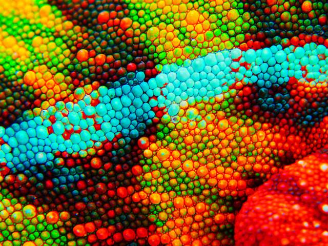 Des scientifiques créent une peau artificielle semblable à celle d'un caméléon