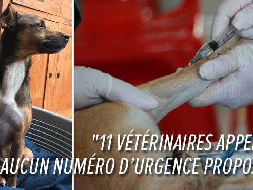 Amalia a galéré pour trouver un docteur en urgence pour Jack: y a-t-il un problème de garde vétérinaire en Wallonie?