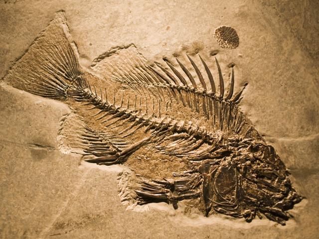 Il y a 10 000 ans, les Hommes mangeaient des poissons pêchés dans des lacs du Sahara
