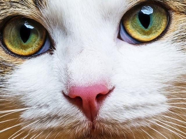 Vous souhaitez voir le monde comme une abeille, un oiseau ou un chat ? C'est possible !