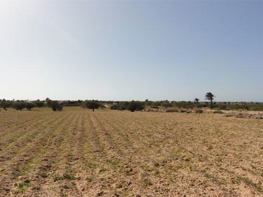 Tunisie- Récupération d'un terrain domanial agricole d'une superficie 24 hectares à la Manouba