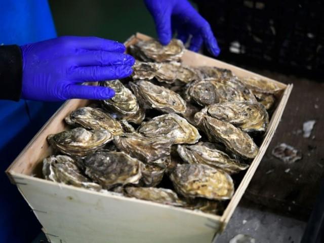 Sécheresse, températures en hausse: les huîtres malmenées par le réchauffement climatique