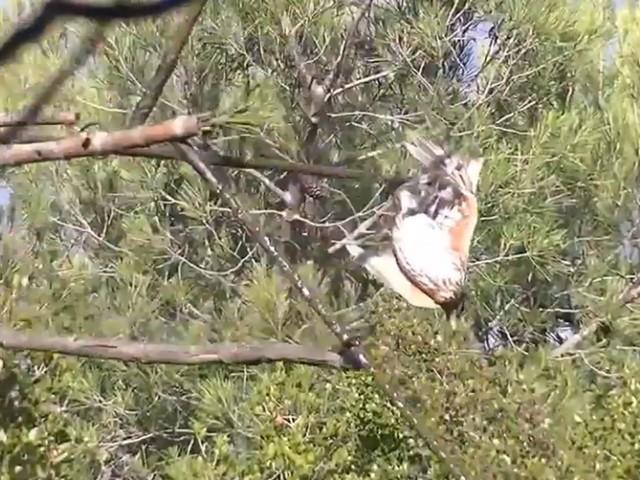 Contre la chasse à la glu, le gouvernement interpellé par les défenseurs des oiseaux