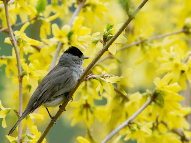 Floraison anticipée : l'hiver particulièrement doux menace-t-il les plantes ?