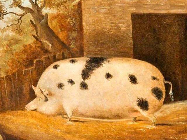 En 1859, Américains et Anglais entraient en guerre à cause du meurtre… d'un cochon
