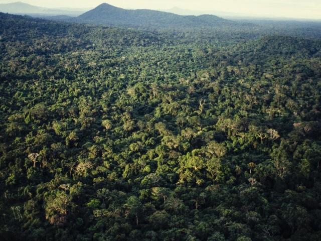 """La forêt amazonienne est-elle vraiment le """"poumon de la planète"""" ?"""