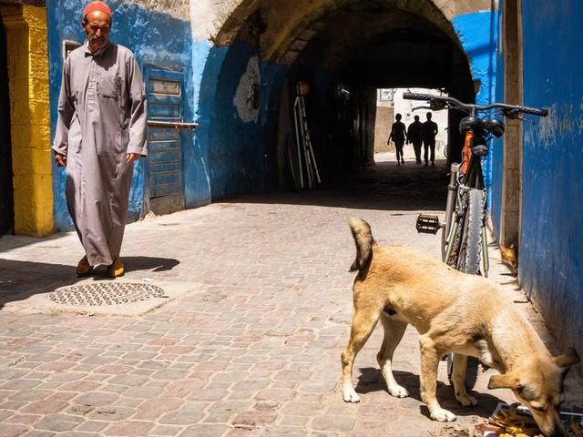 Les chiens errants ne seront plus abattus au Maroc, mais stérilisés