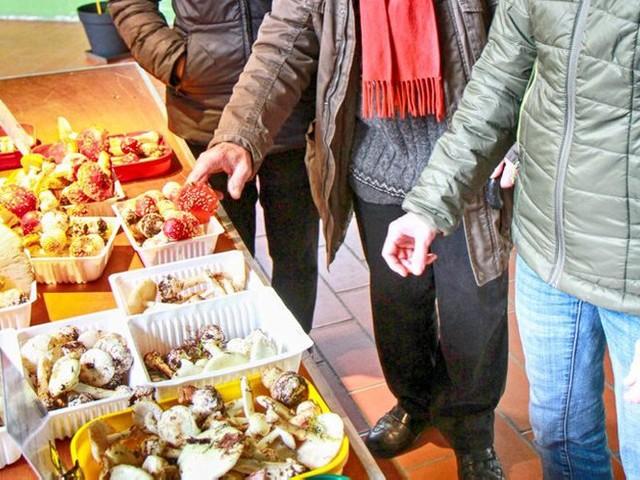 Toulouse. Toxiques ou comestibles, découvrez les champignons