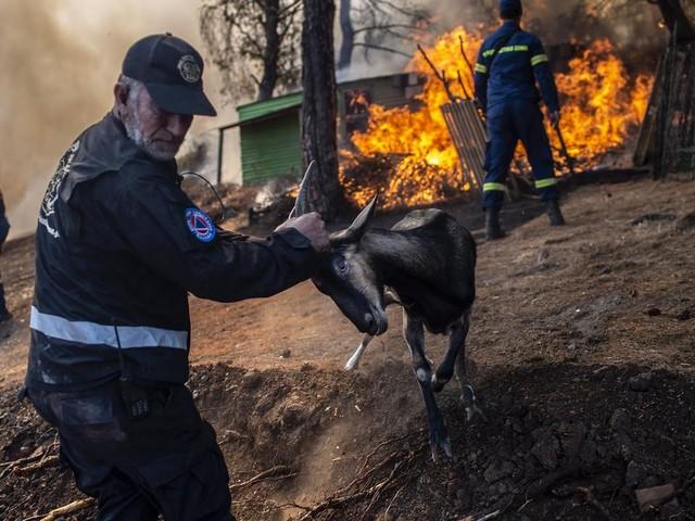 """VIDÉO - La Grèce frappée par un violent incendie sur l'île d'Eubée, """"une énorme catastrophe écologique"""""""