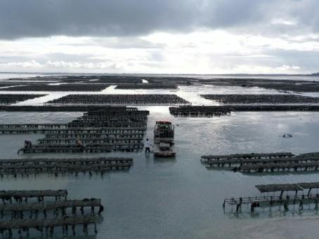 Les ostréiculteurs victimes de la pollution des mers