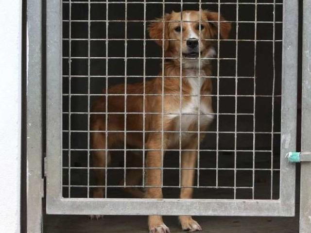 Le ministre de l'Agriculture va lancer une mission sur l'abandon des animaux de compagnie