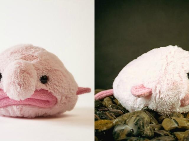 [TOPITRUC] Une peluche blobfish, pour câliner l'animal le plus moche du monde