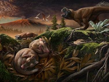 Des fossiles révèlent comment nos oreilles sont nées