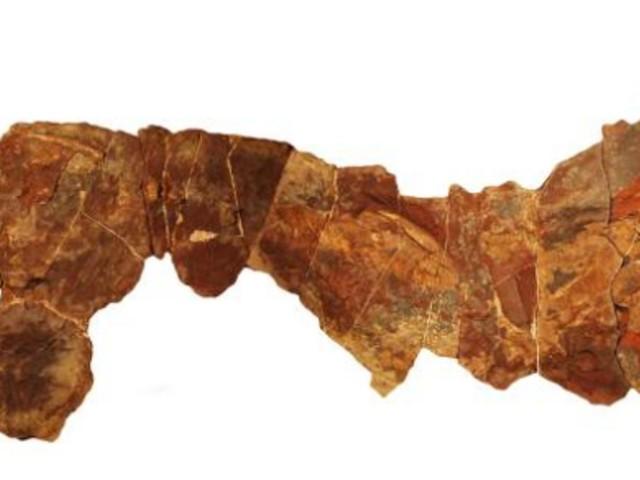 Le squelette fossilisé d'un requin de plus de 360 millions d'années découvert au Maroc