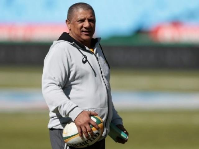 Rugby: des Springboks griffés par les Lions