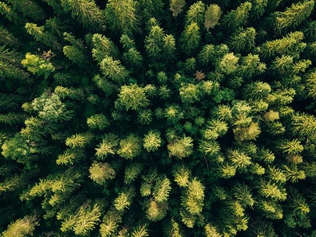 Premier téléthon en faveur de l'environnement : 2,4 millions d'euros récoltés