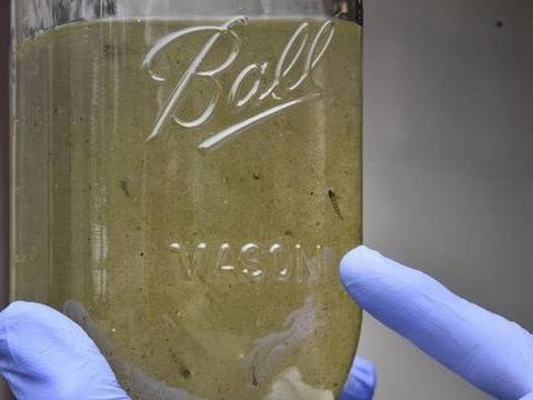 Les microplastiques dans l'eau potable, un risque encore faible pour la santé, selon l'OMS