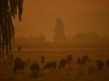 Tempête de poussière et averse de grèle sur l'Australie sinistrée par les feux