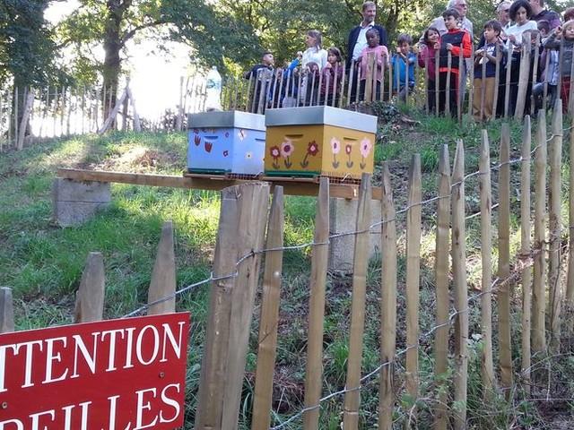 Les abeilles gagnent du terrain dans l'agglomération de Limoges