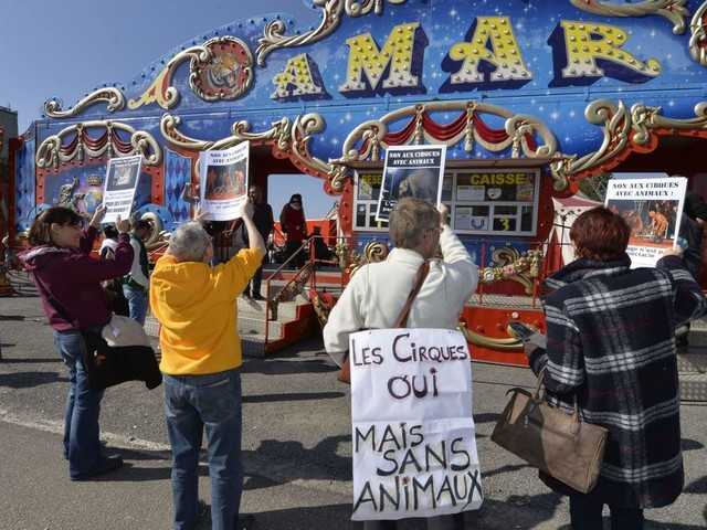 La Ville de Paris vote la fin des spectacles d'animaux sauvages dans les cirques dès 2020