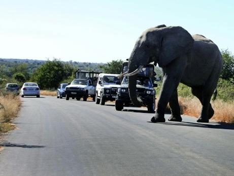 En Afrique du Sud, le tourisme des safaris fait le dos rond face à la pandémie