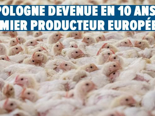 La Pologne: milliardaire en poulets et championne d'Europe d'élevage de volaille