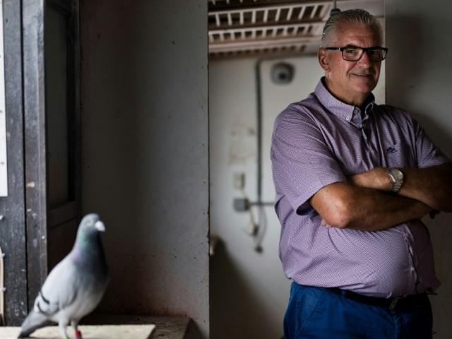 Joël Verschoot, l'homme au pigeon qui valait un million
