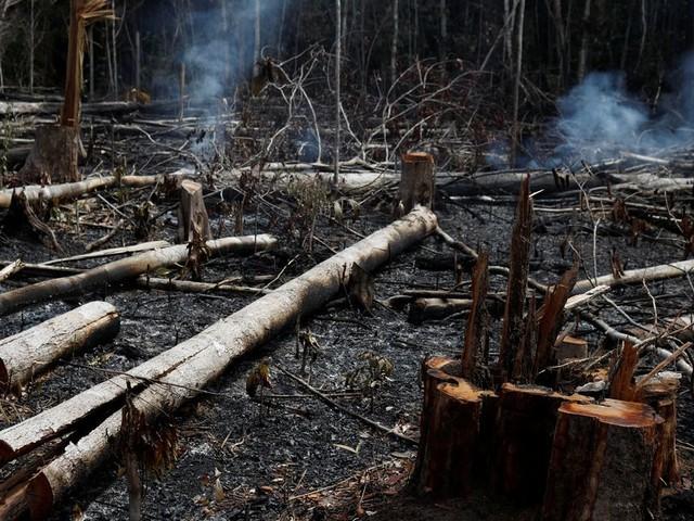 Les incendies en Amazonie sont dus à l'Homme et Bolsonaro est sur le banc des accusés