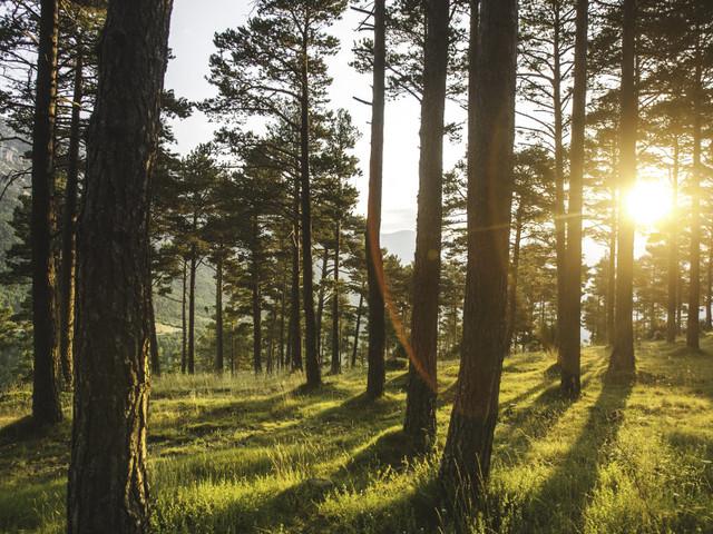 L'environnement: l'incroyable expression de la jeunesse