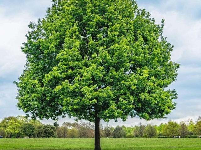 50 nuances de vert : quand les arbres ont la cote