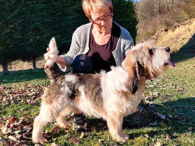 Un chien Haut-Garonnais pourrait remporter la médaille d'or au Salon de l'Agriculture