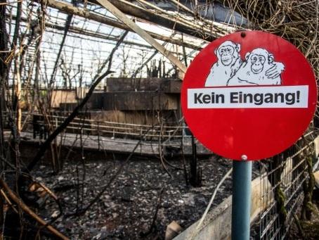 Allemagne: l'incendie d'un zoo relance le débat sur la pyrotechnie du Nouvel An