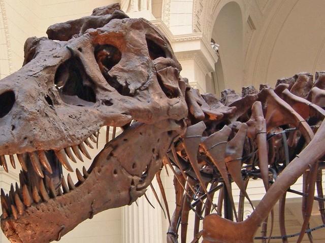 Un étrange dinosaure herbivore ancêtre du T-Rex ?